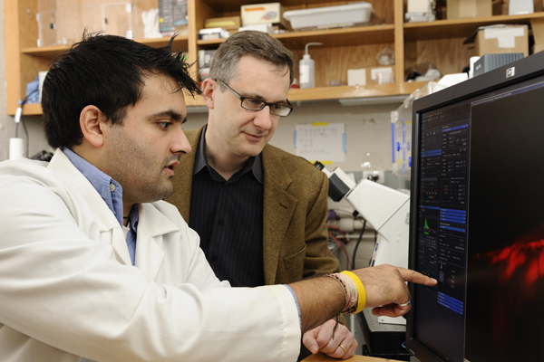 Shyam Khatau and Denis Wirtz played a key role in finding a bundled 'cap' of threadlike fibers that holds a cell's nucleus in its proper place. Photo: Will Kirk/Homewoodphoto.jhu.edu